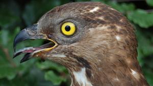 Wind bepaalt waar in Afrika jonge trekvogels terecht komen