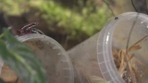 Video | Deze docent heeft 's zomers alle dieren van de HvA in huis